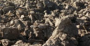 """""""Labourer n'accélère pas l'appauvrissement des sols"""""""