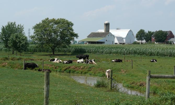 Les Amish utilisent des pesticides et des OGM et ont moins de cancers
