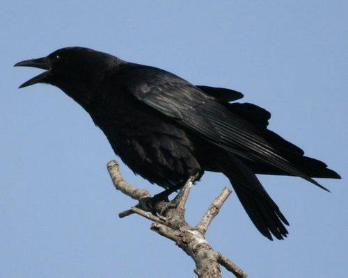 En plus d'être menaçant, le mystérieux corbeau est très mal renseigné...